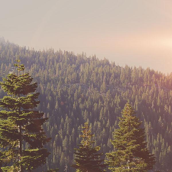 iPapers.co-Apple-iPhone-iPad-Macbook-iMac-wallpaper-mu54-tree-wood-mountain-nature-dark-green-flare-wallpaper