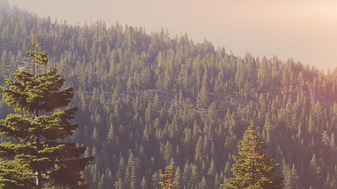 desktop-wallpaper-laptop-mac-macbook-air-mu54-tree-wood-mountain-nature-dark-green-flare-wallpaper