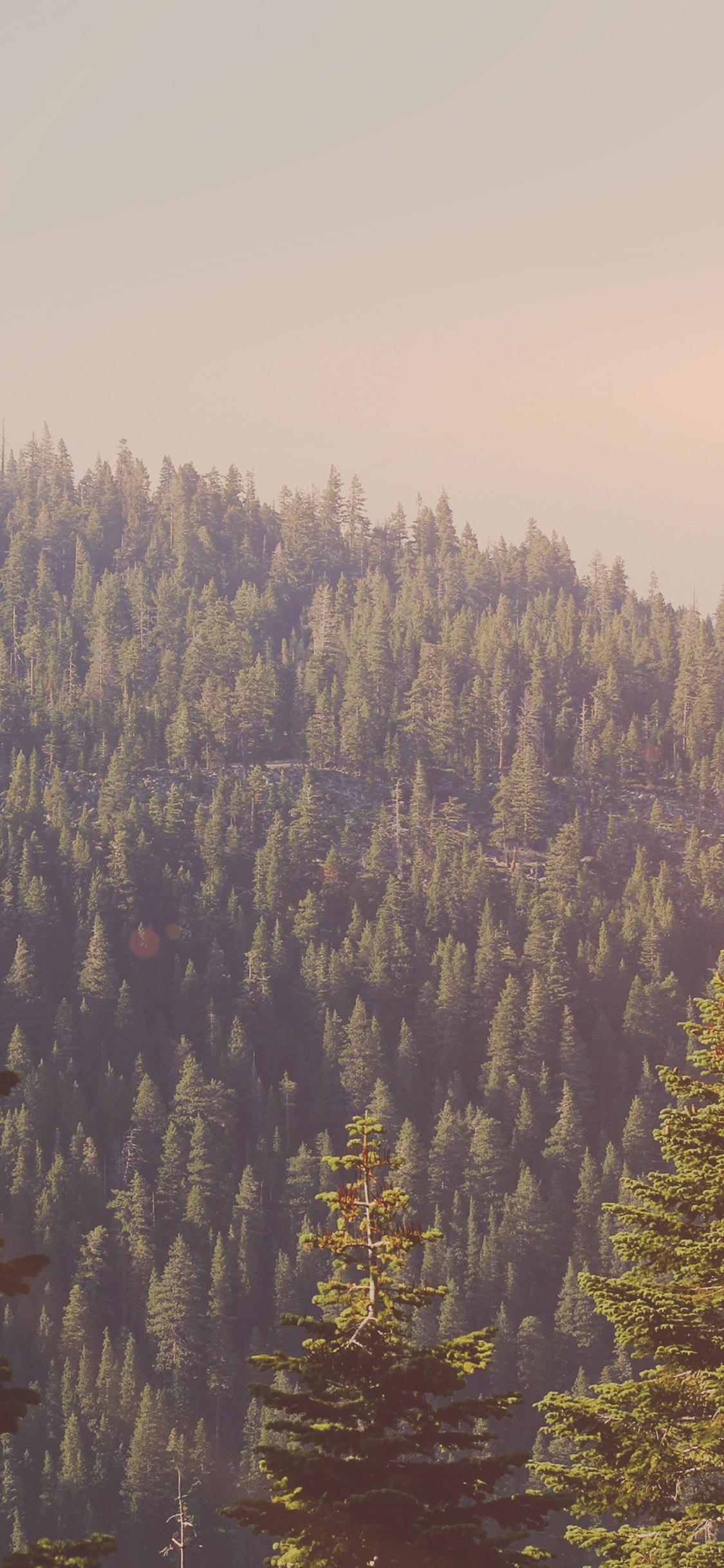iPhonexpapers.com-Apple-iPhone-wallpaper-mu54-tree-wood-mountain-nature-dark-green-flare