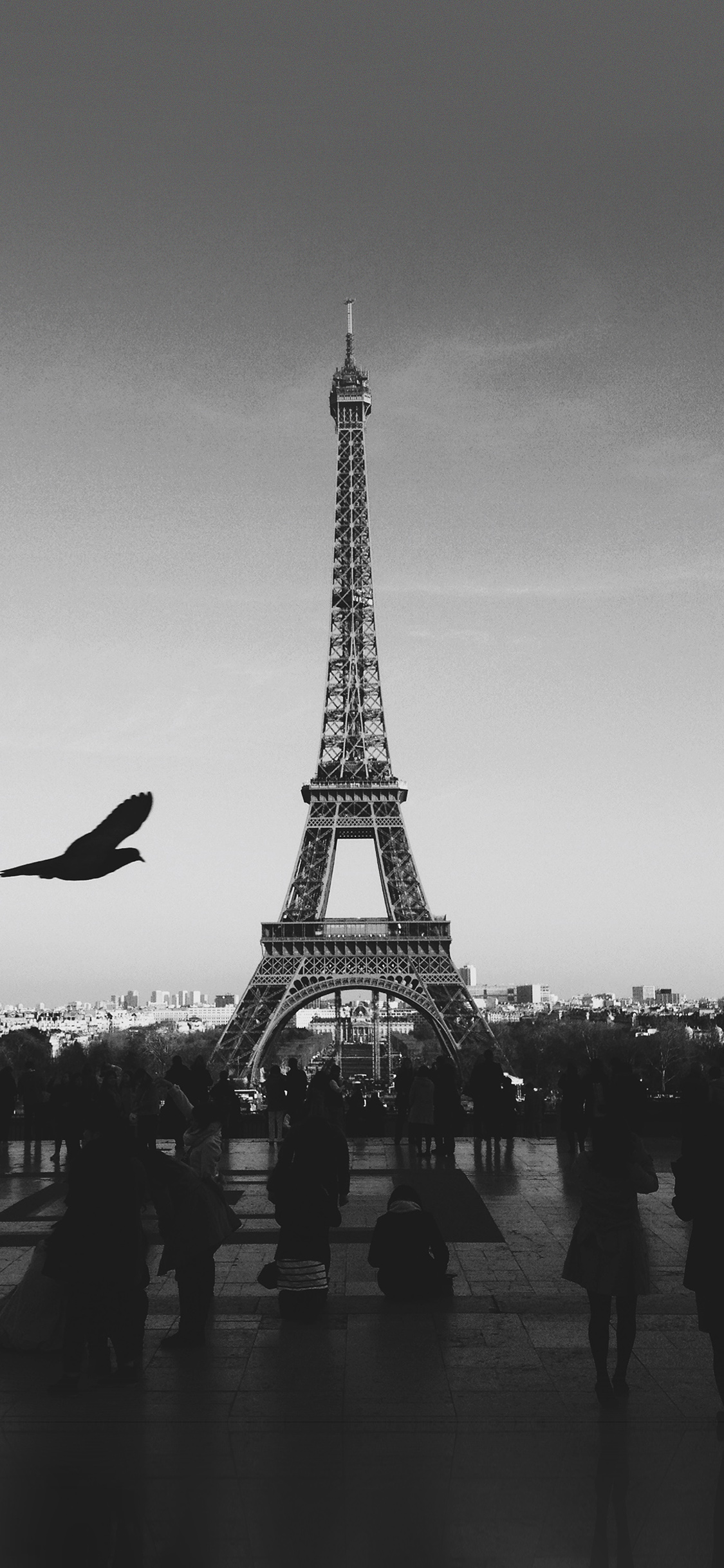 iPhoneXpapers.com-Apple-iPhone-wallpaper-mu80-paris-eiffel-tower-tour-dark-bw-bird-france