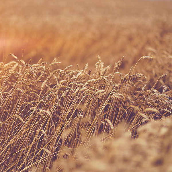 iPapers.co-Apple-iPhone-iPad-Macbook-iMac-wallpaper-mu90-fall-grass-yellow-nature-flower-flare-wallpaper
