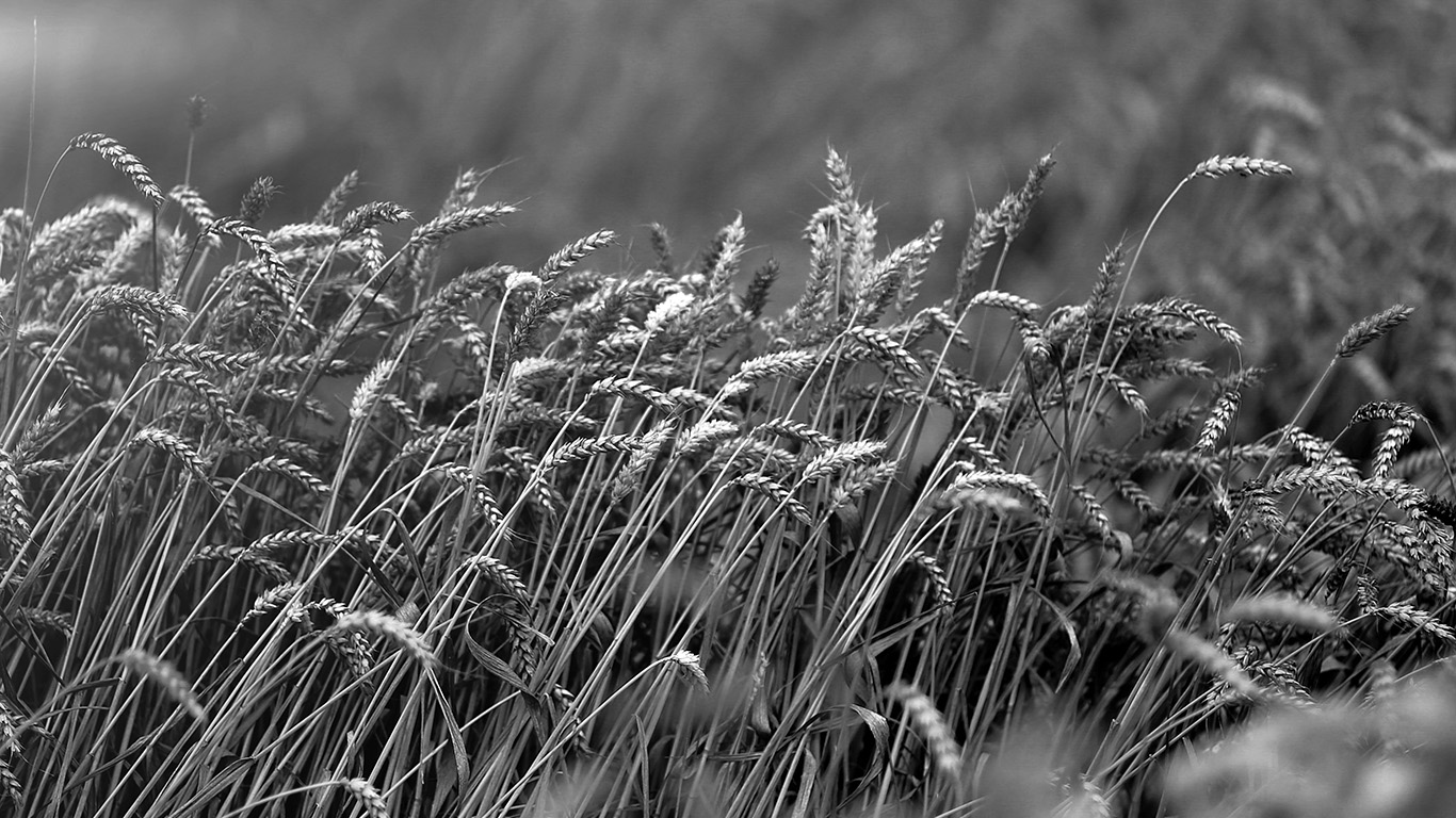 wallpaper-desktop-laptop-mac-macbook-mu91-fall-grass-nature-flower-bw-dark