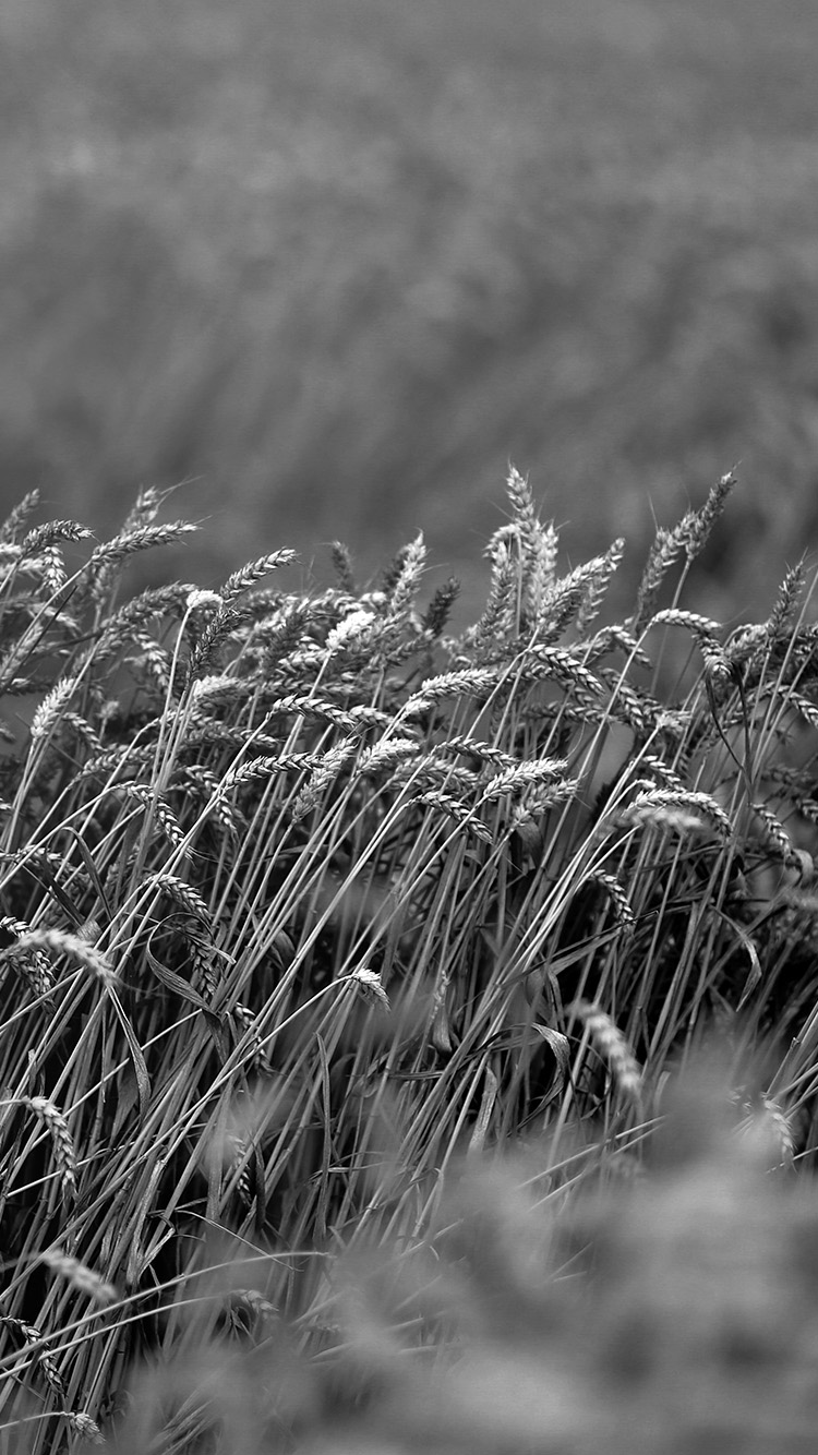 Papers.co-iPhone5-iphone6-plus-wallpaper-mu91-fall-grass-nature-flower-bw-dark