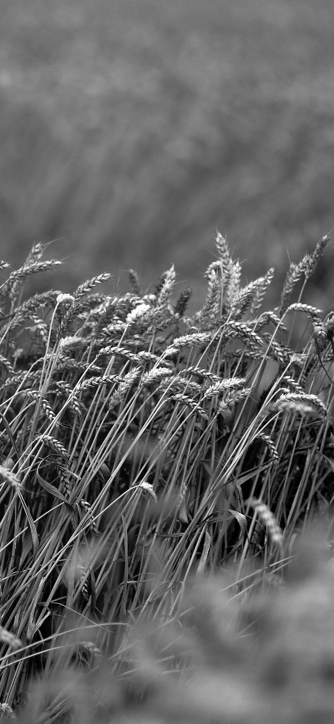 iPhoneXpapers.com-Apple-iPhone-wallpaper-mu91-fall-grass-nature-flower-bw-dark