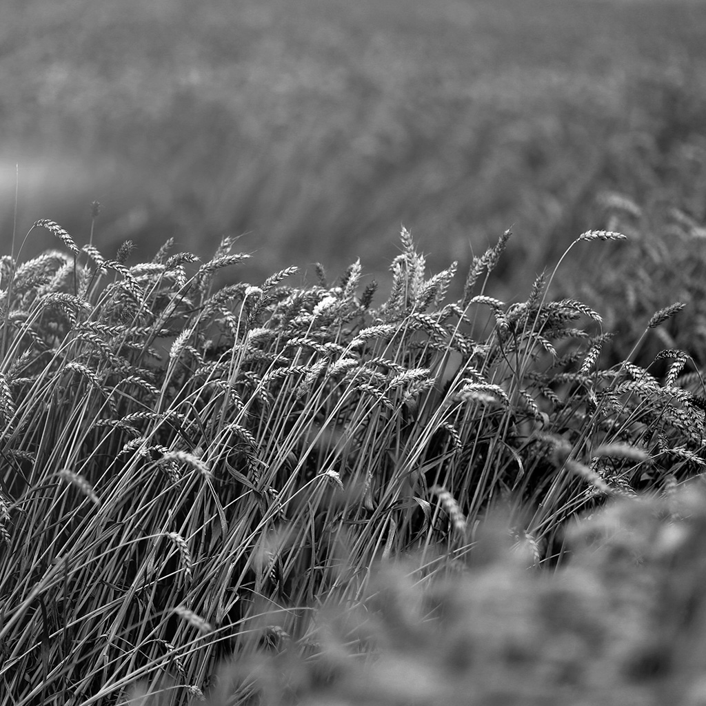 wallpaper-mu91-fall-grass-nature-flower-bw-dark-wallpaper