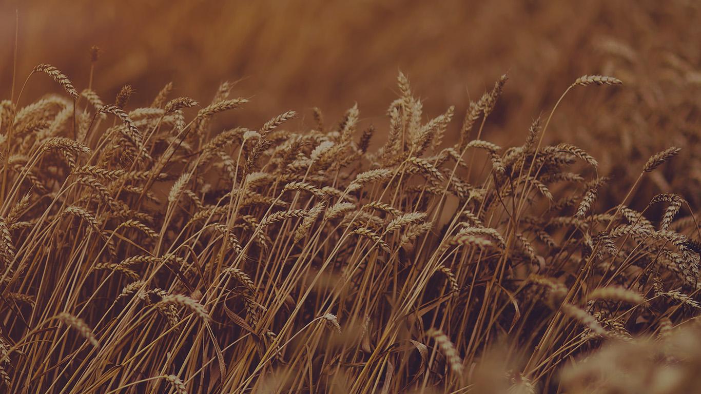 desktop-wallpaper-laptop-mac-macbook-air-mu92-fall-grass-nature-flower-dark-wallpaper