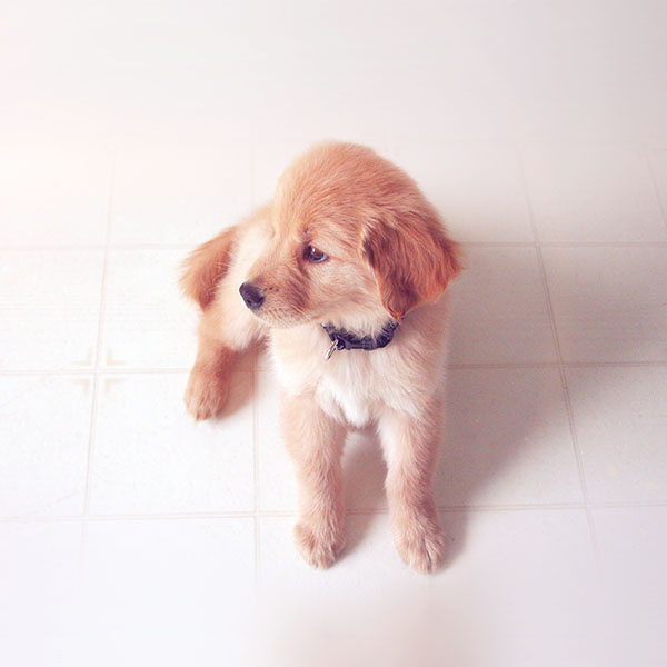 iPapers.co-Apple-iPhone-iPad-Macbook-iMac-wallpaper-mv00-puppy-love-cute-animal-nature-sitting-dog-blue-wallpaper