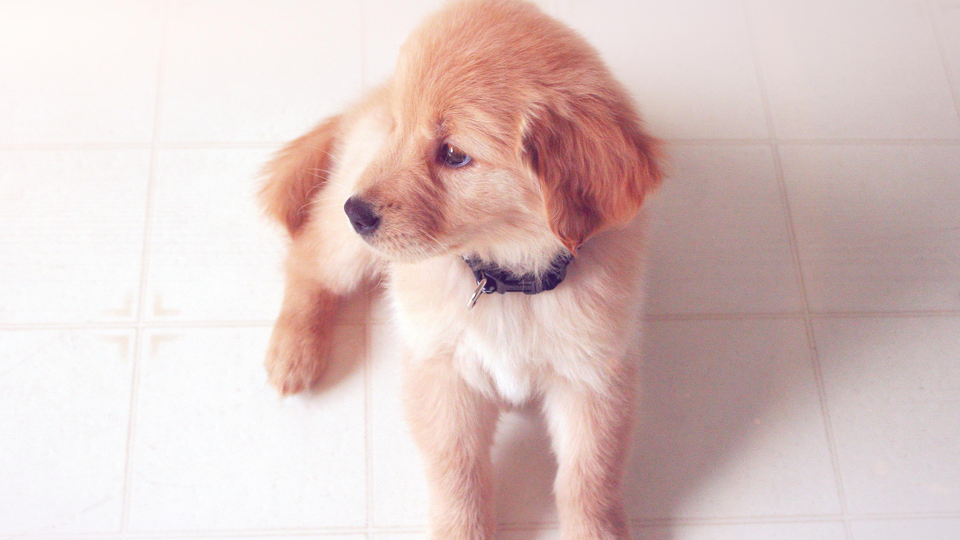 essays on pets animals