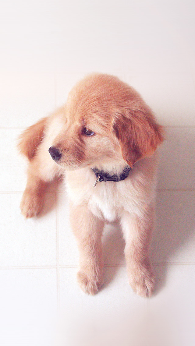 puppy love essay Free essay reviews  you're writing a story about the time you got a puppy and what it was like training the puppy  when approached with patience or love,.
