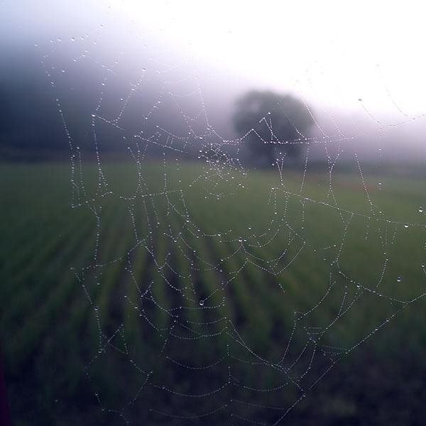 iPapers.co-Apple-iPhone-iPad-Macbook-iMac-wallpaper-mv02-morning-dew-spider-web-rain-water-nature-wallpaper