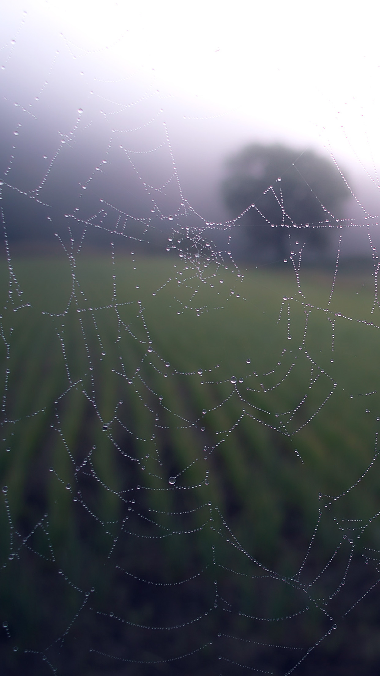 iphone7papers - mv02-morning-dew-spider-web-rain-water-nature