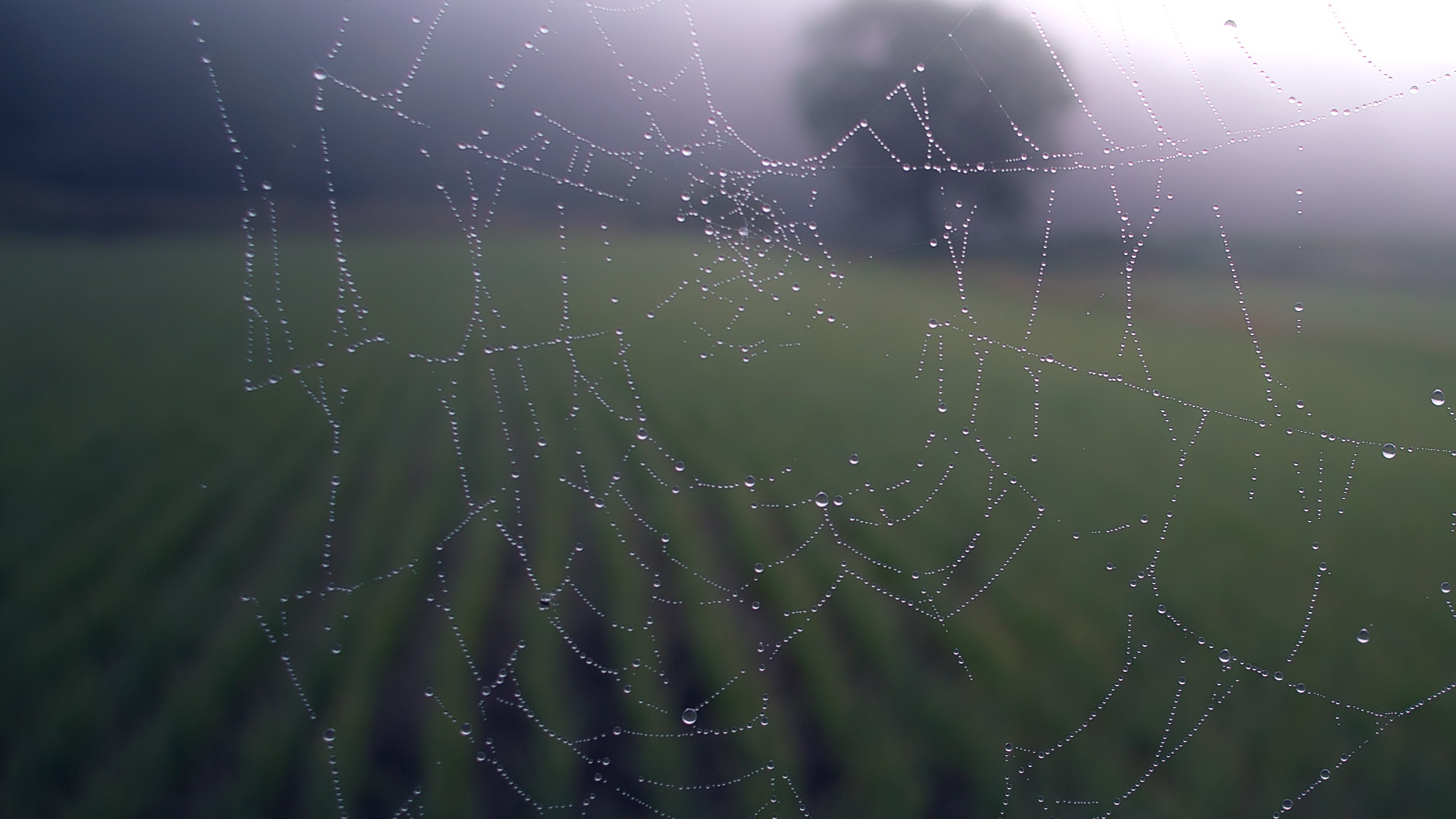 wallpaper for desktop, laptop | mv02-morning-dew-spider-web-rain