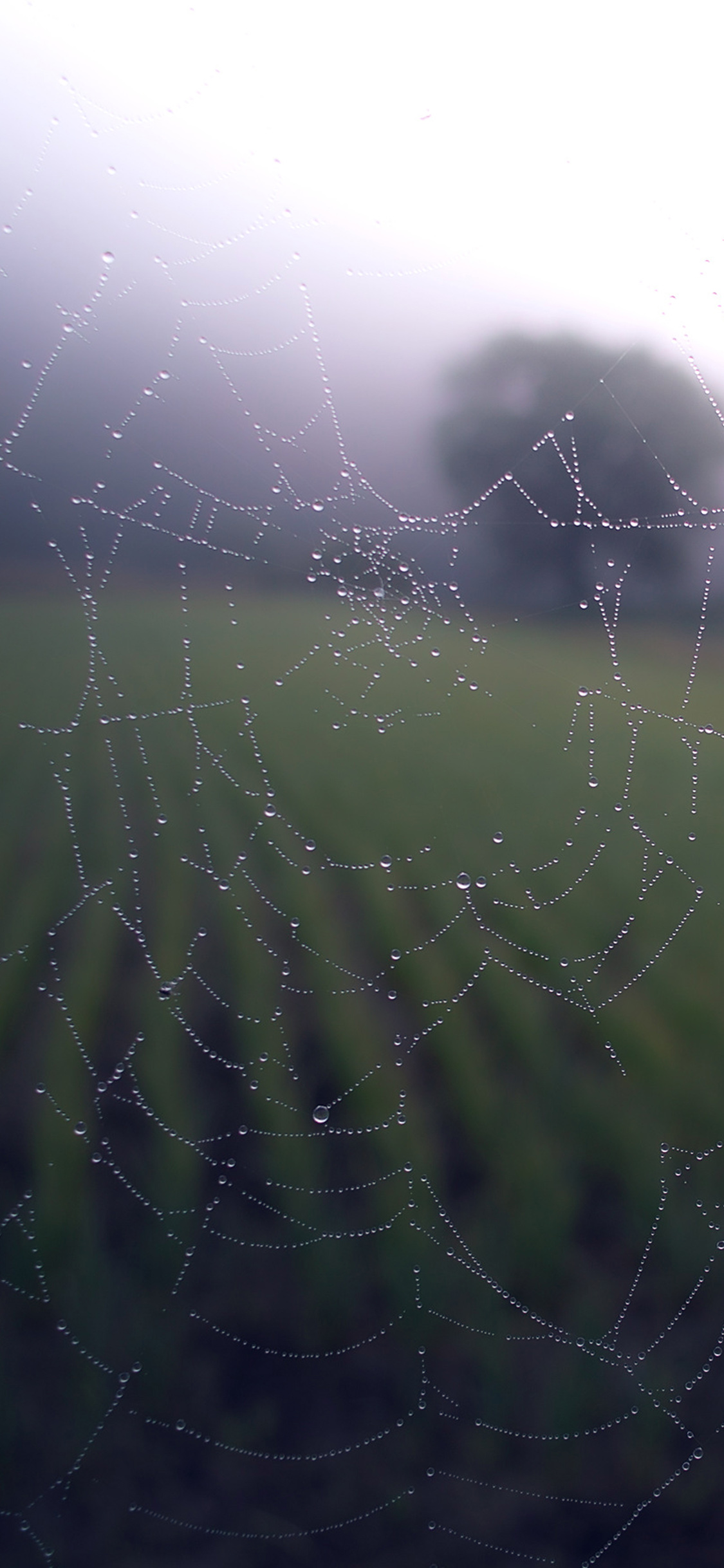 iPhoneXpapers.com-Apple-iPhone-wallpaper-mv02-morning-dew-spider-web-rain-water-nature