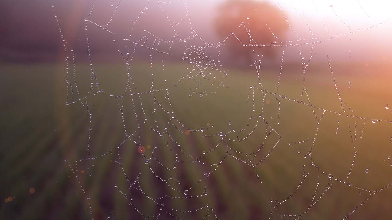 desktop-wallpaper-laptop-mac-macbook-airmv03-morning-dew-spider-web-rain-water-nature-flare-wallpaper