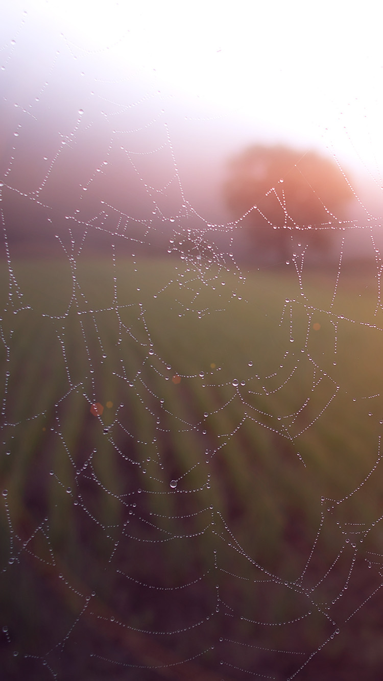 Papers.co-iPhone5-iphone6-plus-wallpaper-mv03-morning-dew-spider-web-rain-water-nature-flare