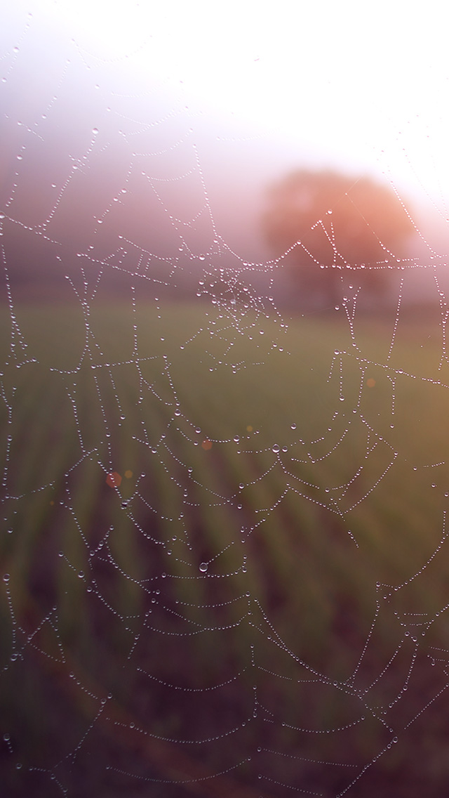 freeios8.com-iphone-4-5-6-plus-ipad-ios8-mv03-morning-dew-spider-web-rain-water-nature-flare