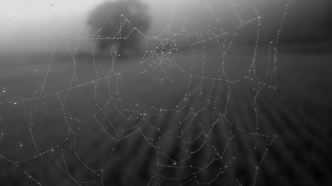wallpaper-desktop-laptop-mac-macbook-mv04-morning-dew-spider-web-rain-water-nature-bw-dark