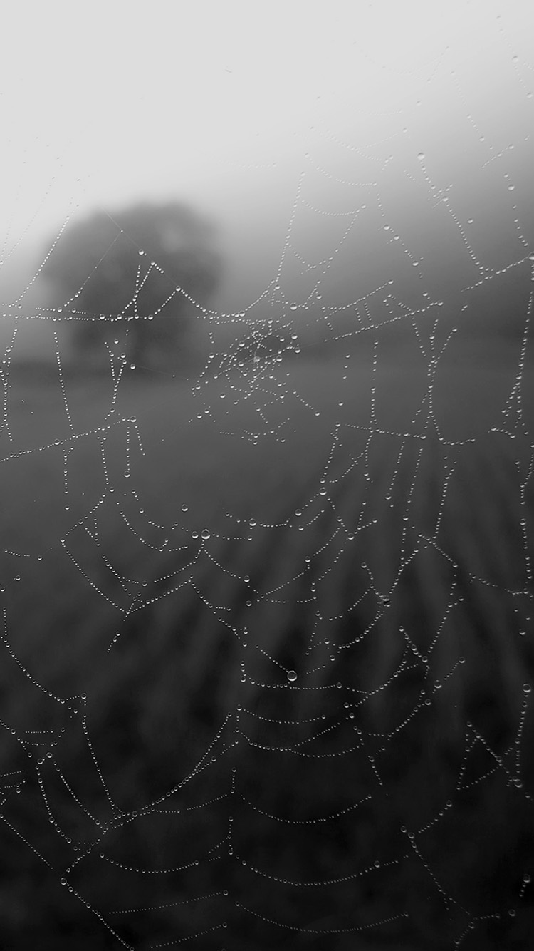 iPhone6papers.co-Apple-iPhone-6-iphone6-plus-wallpaper-mv04-morning-dew-spider-web-rain-water-nature-bw-dark