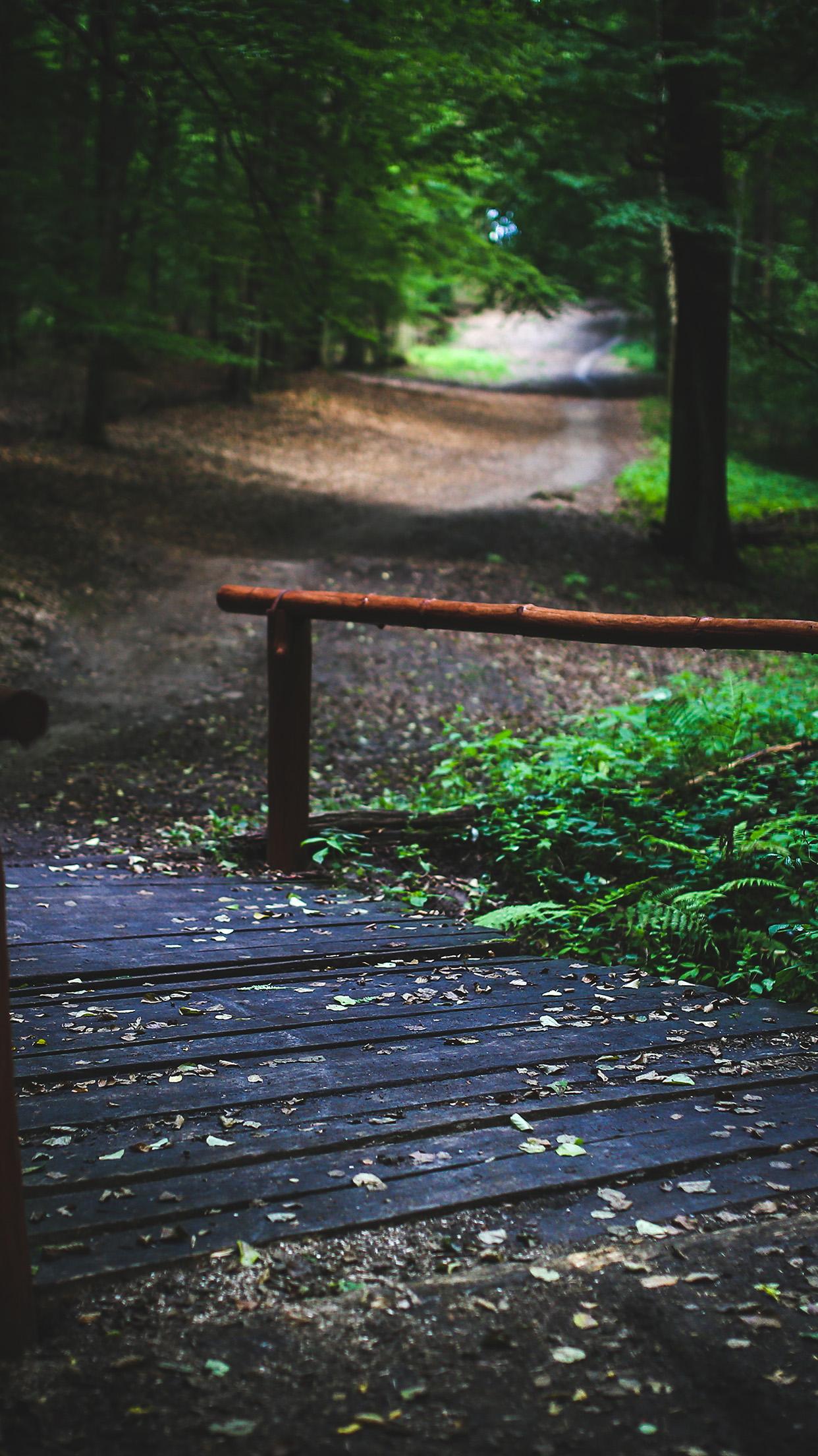 Mv08 Wood Nature Forest Road Mountain Dark Summer