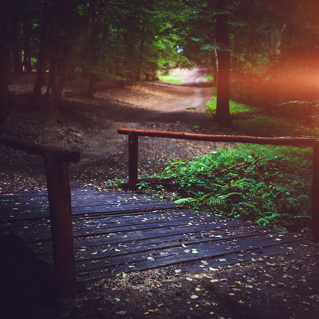 android-wallpaper-mv09-wood-nature-forest-road-mountain-flare-wallpaper
