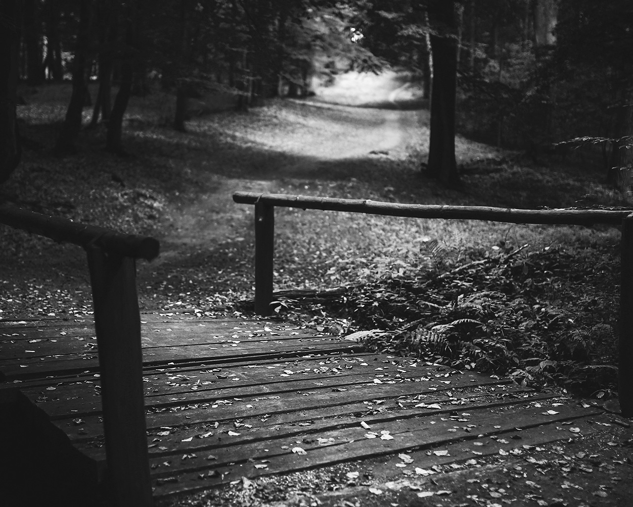 dark woods essay 'stopping by woods on a snowy evening' is one of robert frost's most famous  poems, filled with  the speaker continues to stand near the woods, attracted by  the deep, dark silence of his surroundings  writing & structuring an essay in.