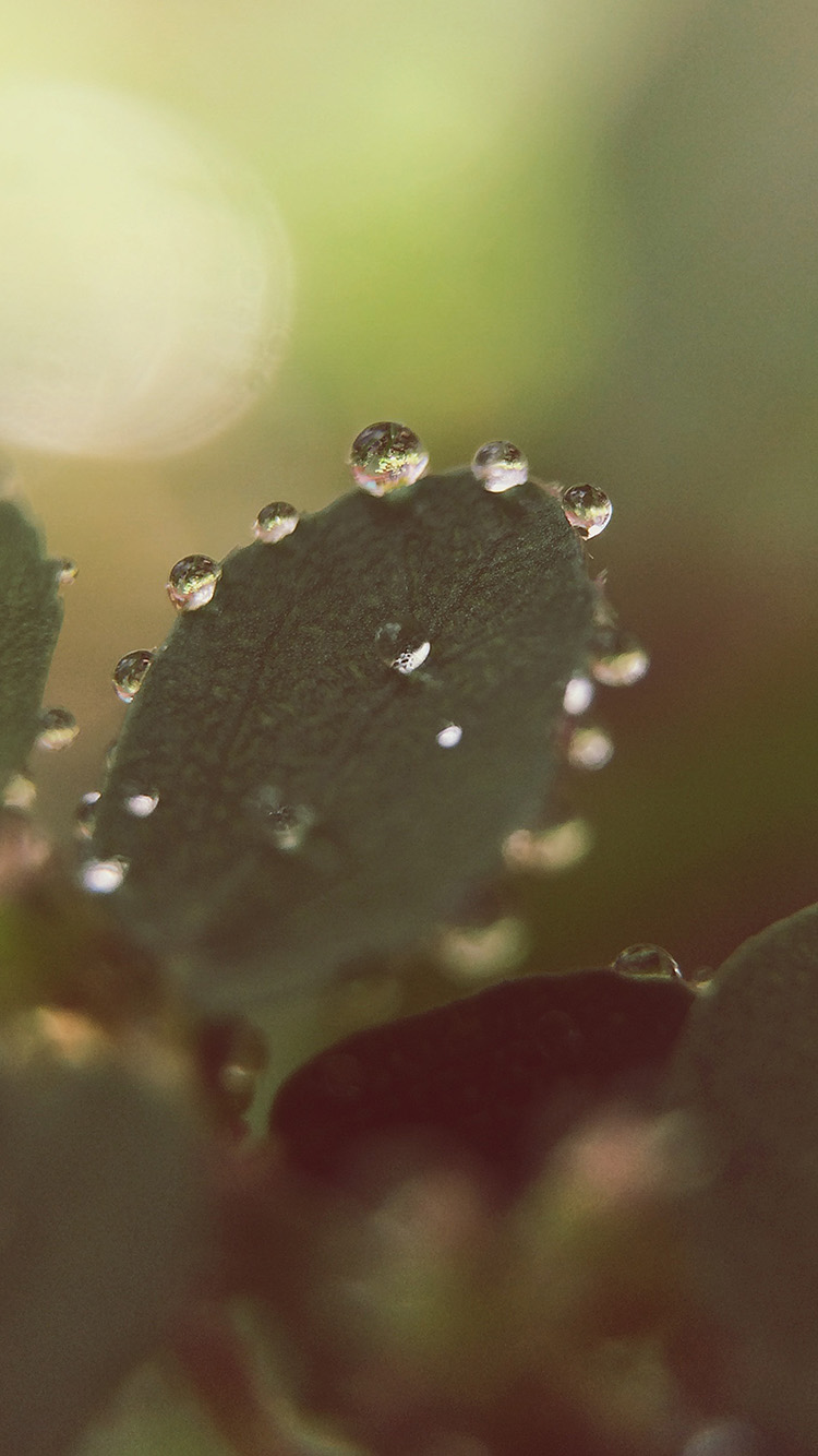 iPhonepapers.com-Apple-iPhone8-wallpaper-mv13-nature-morning-dew-leaf-flower-rain