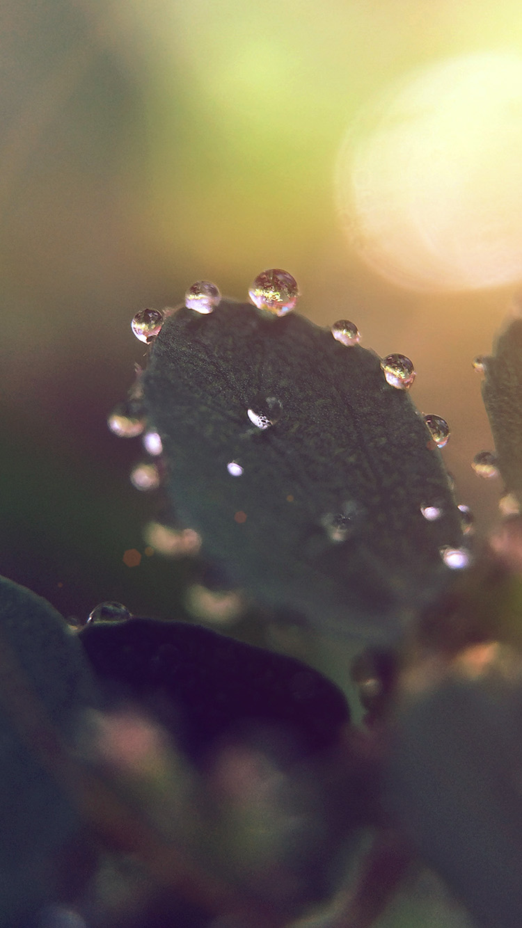 Daily Wallpaper Morning Dew Exclusive I Like To Waste My
