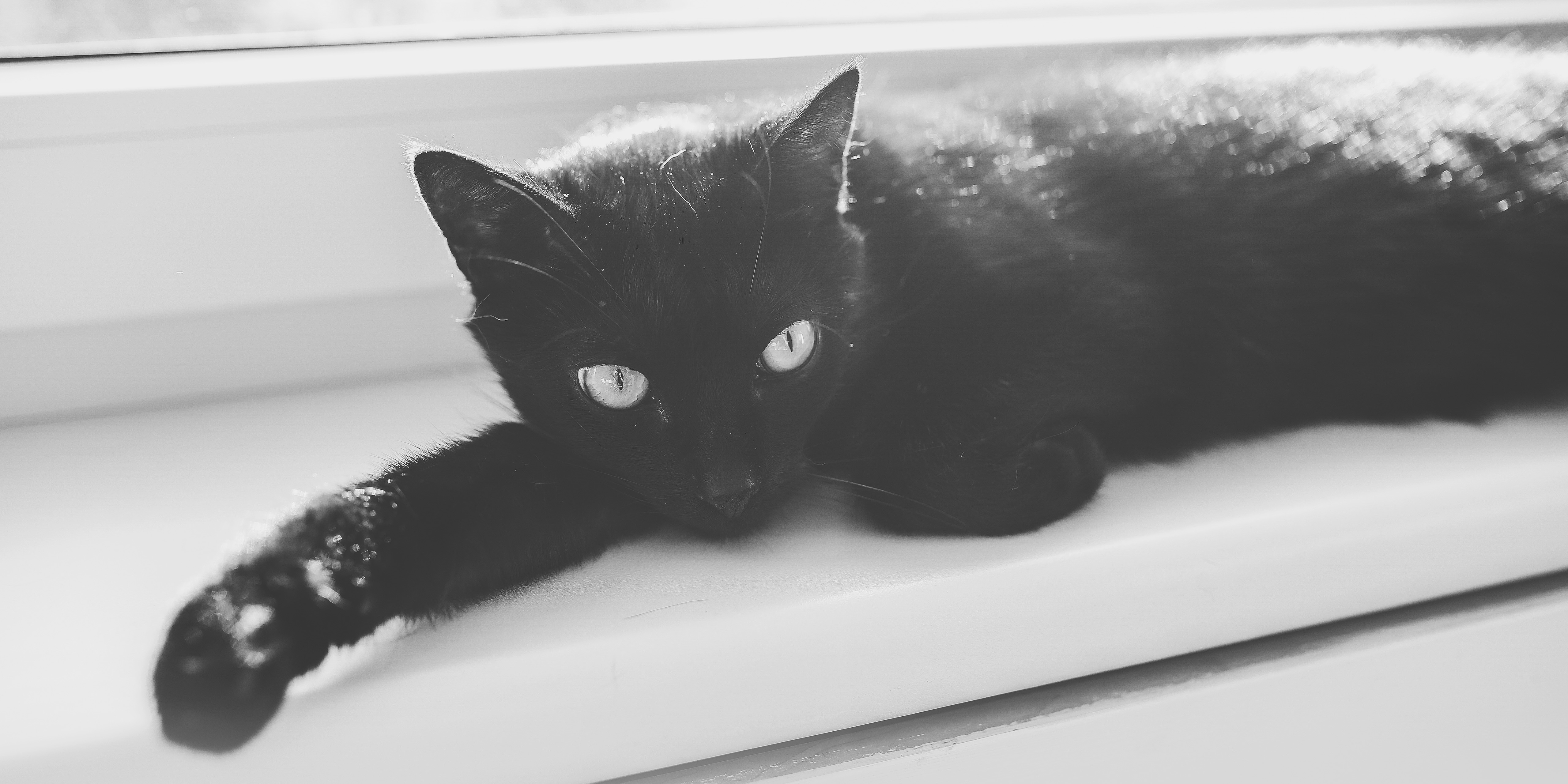 the black cat essay Below is an essay on the black cat from anti essays, your source for research papers, essays, and term paper examples in this story, the narrator portrays a man who likes animals, sincere, and is happily married.