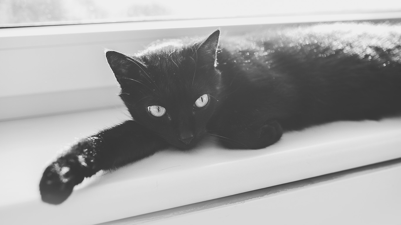 desktop-wallpaper-laptop-mac-macbook-airmv32-black-cat-animal-cute-watching-wallpaper