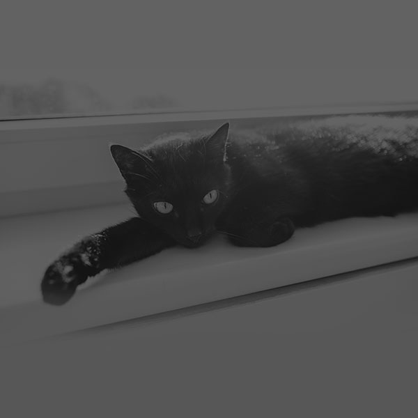 iPapers.co-Apple-iPhone-iPad-Macbook-iMac-wallpaper-mv33-black-cat-animal-cute-watching-dark-bw-wallpaper