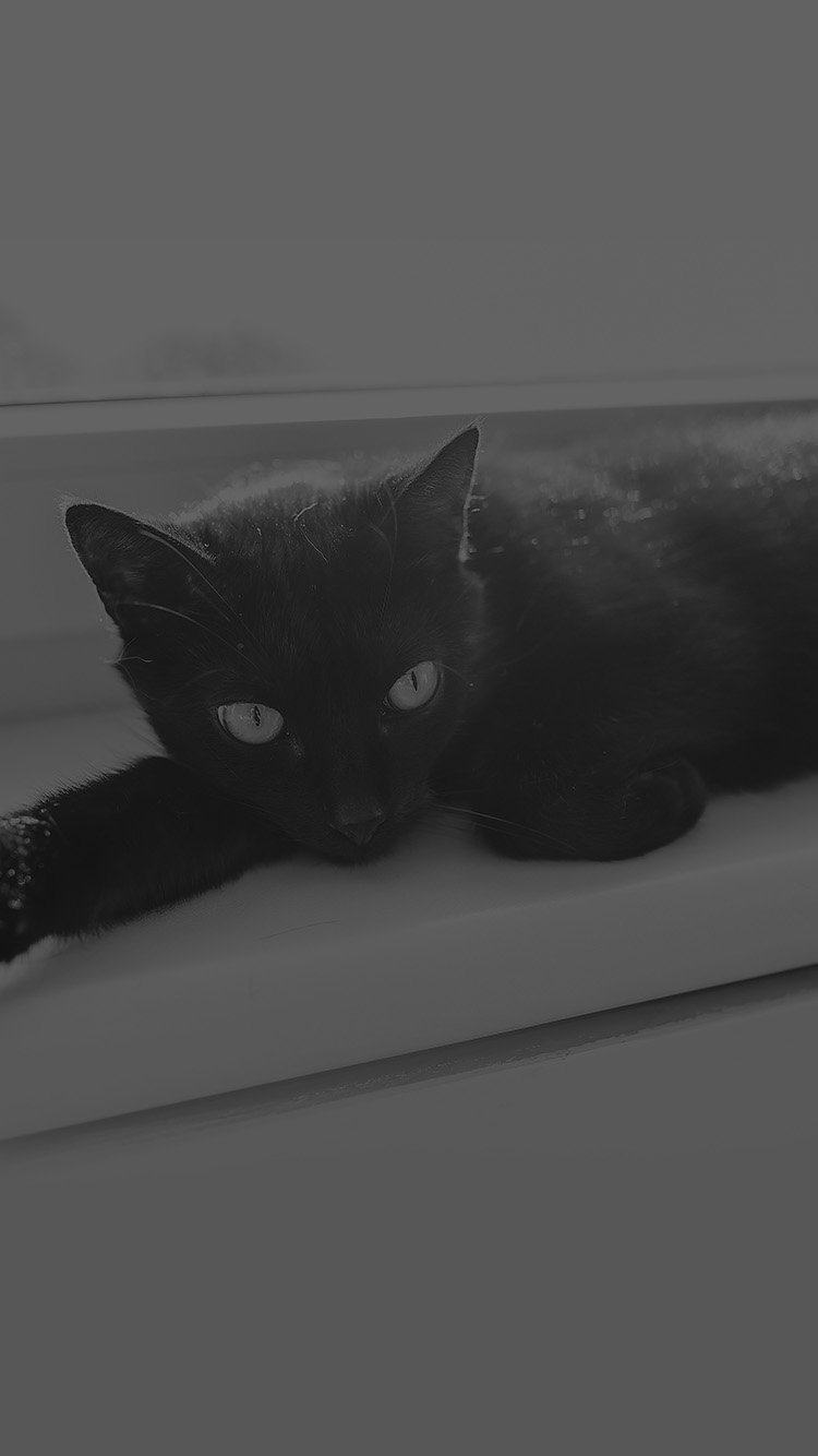 iPhone6papers.co-Apple-iPhone-6-iphone6-plus-wallpaper-mv33-black-cat-animal-cute-watching-dark-bw