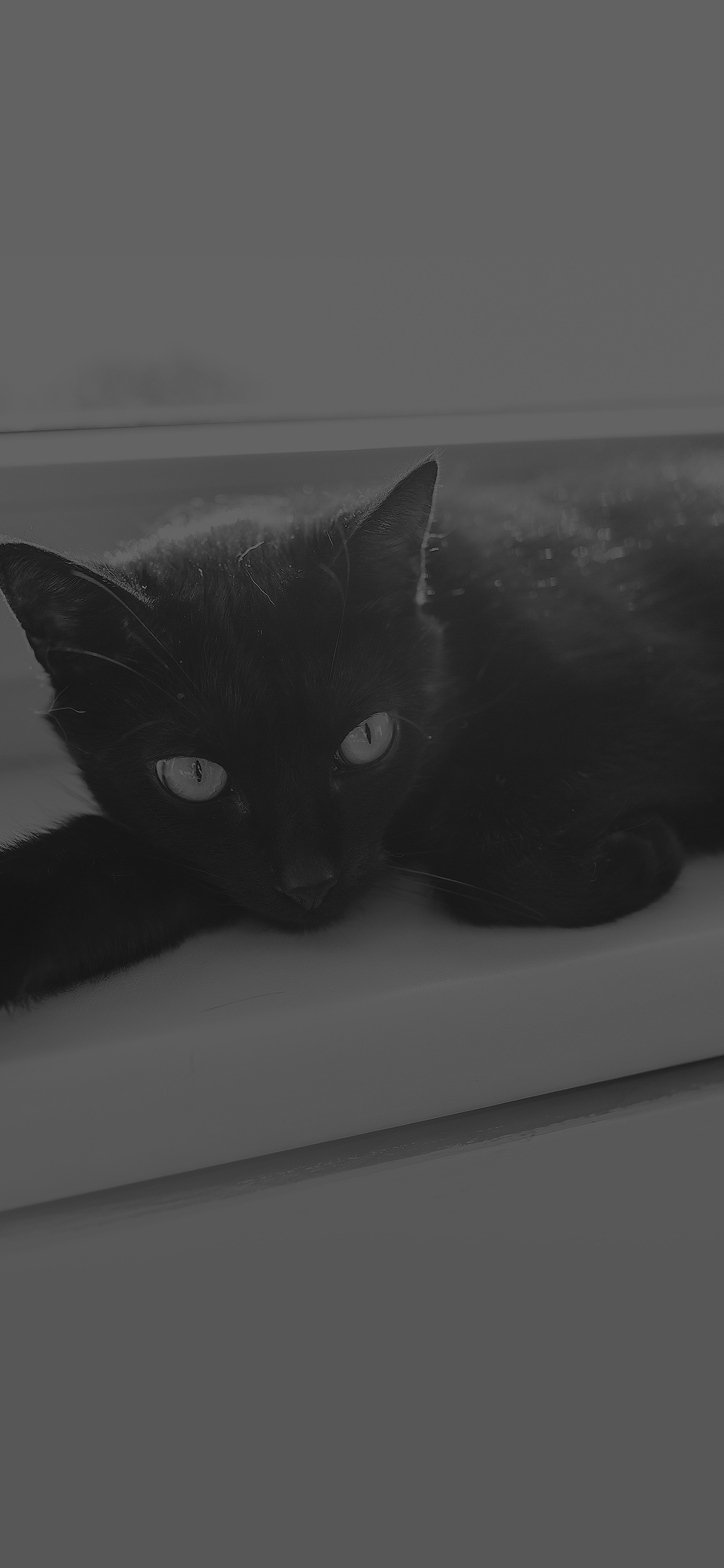 Mv33 Black Cat Animal Cute Watching Dark Bw Wallpaper