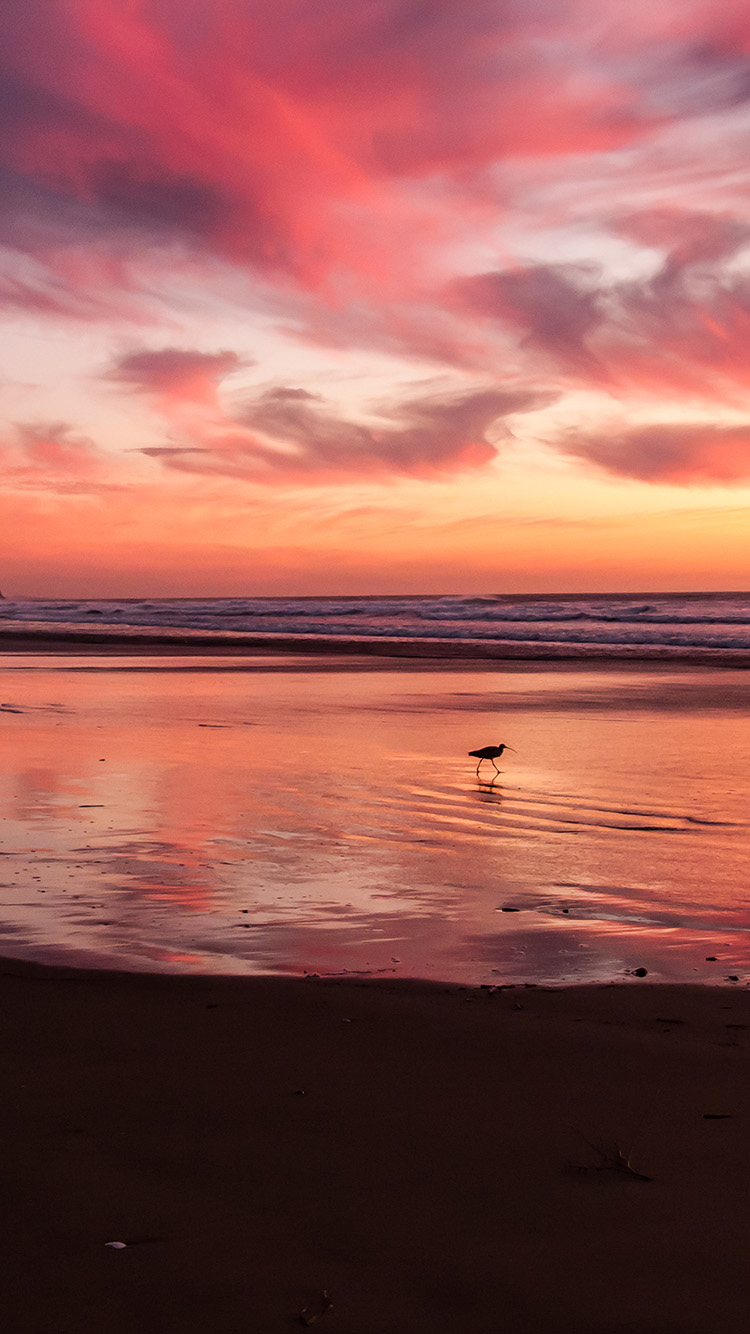 iPhone6papers.co-Apple-iPhone-6-iphone6-plus-wallpaper-mv55-sunset-beach-bird-red-orange-nature-sea