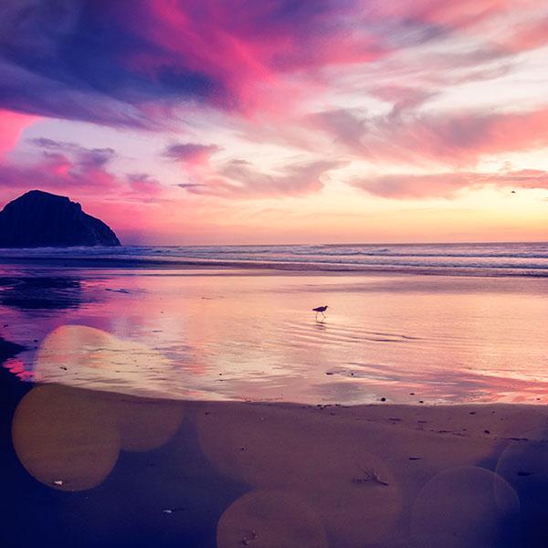 iPapers.co-Apple-iPhone-iPad-Macbook-iMac-wallpaper-mv56-sunset-beach-bird-red-orange-nature-sea-bokeh-wallpaper