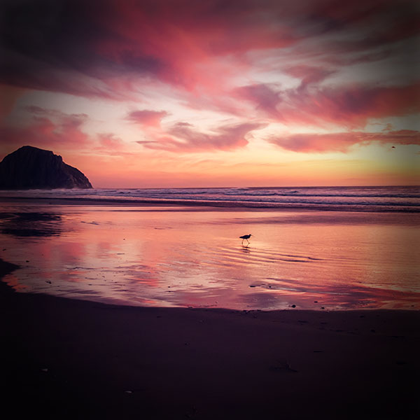 iPapers.co-Apple-iPhone-iPad-Macbook-iMac-wallpaper-mv57-sunset-beach-bird-red-orange-nature-sea-vignette-wallpaper