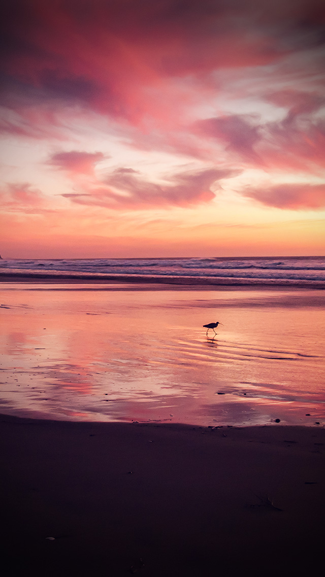 freeios8.com-iphone-4-5-6-plus-ipad-ios8-mv57-sunset-beach-bird-red-orange-nature-sea-vignette