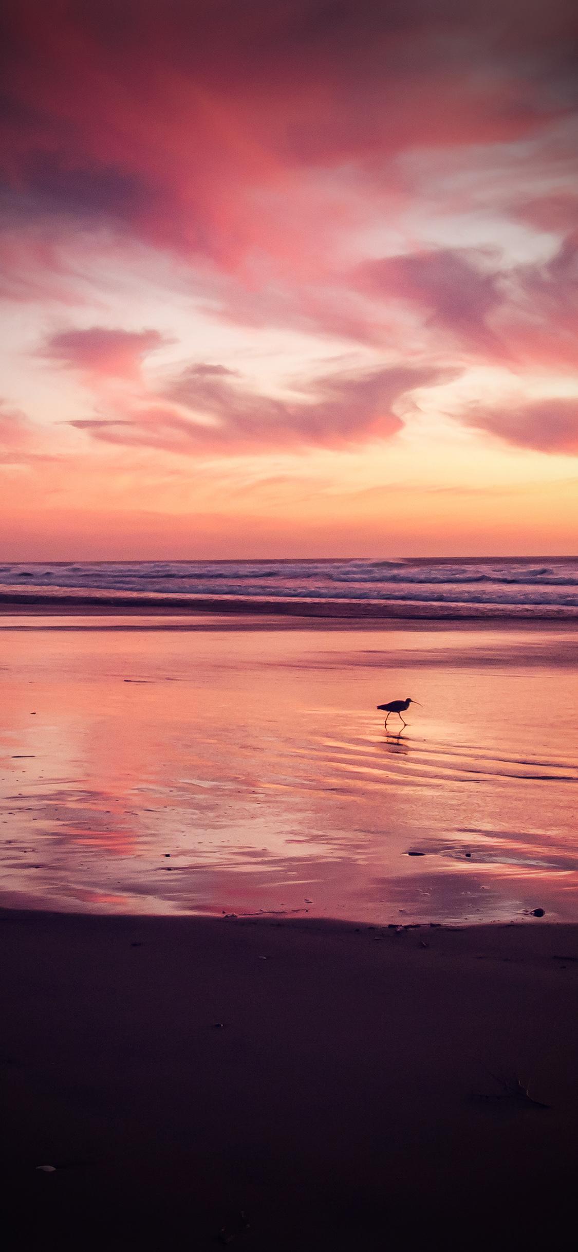 iPhoneXpapers.com-Apple-iPhone-wallpaper-mv57-sunset-beach-bird-red-orange-nature-sea-vignette