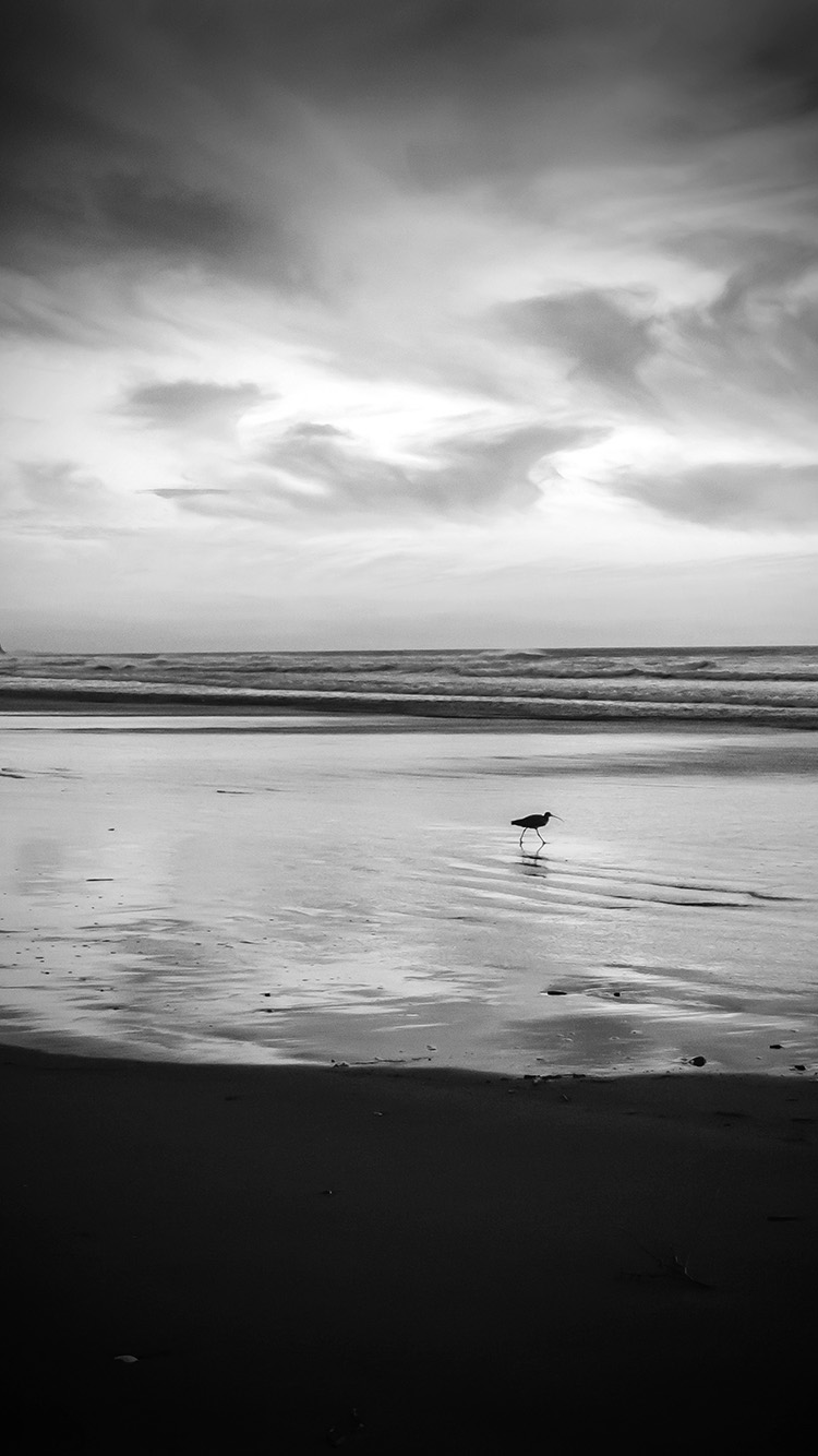 iPhonepapers.com-Apple-iPhone-wallpaper-mv58-sunset-beach-bird-red-orange-nature-sea-dark-bw