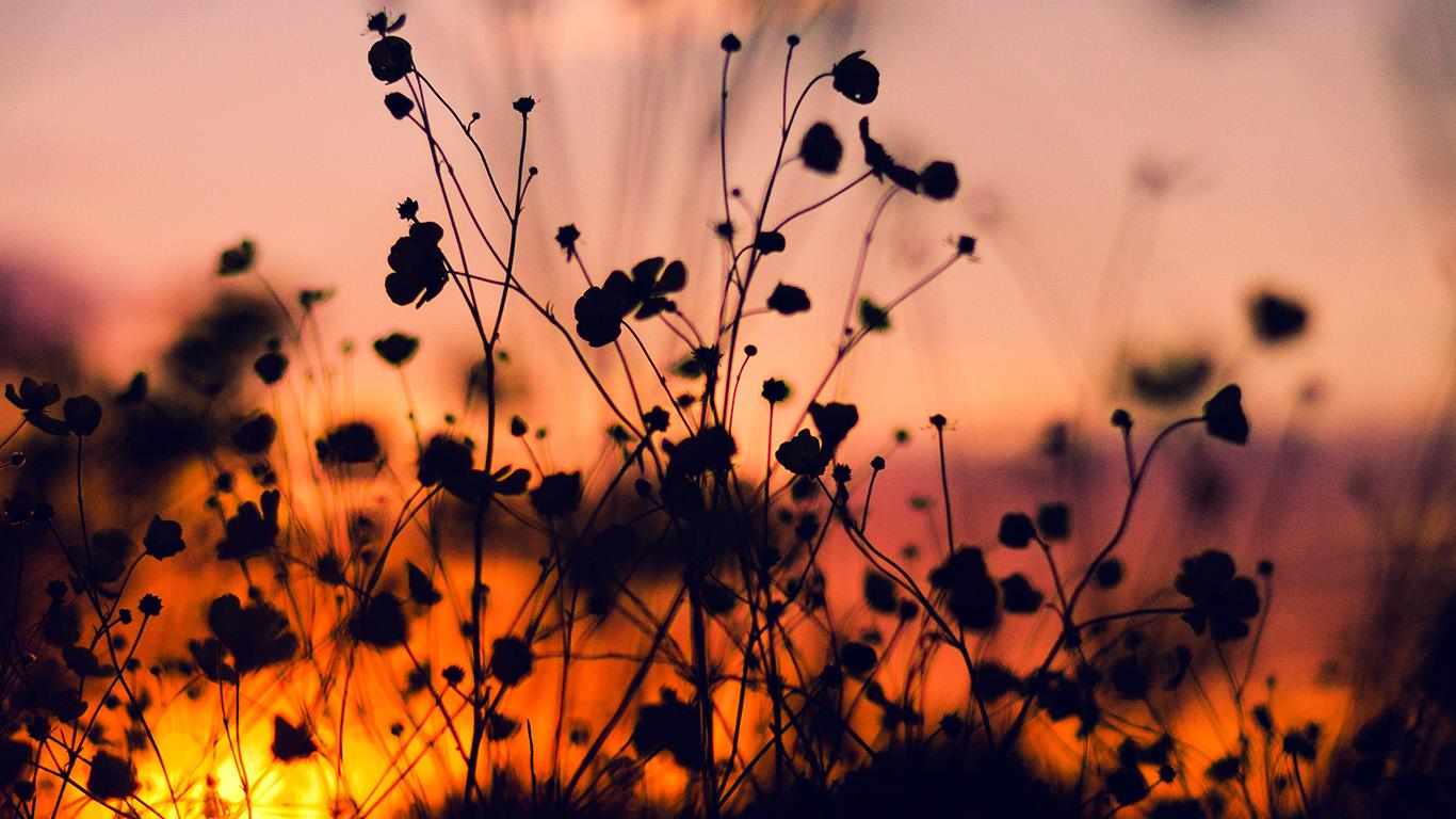 desktop-wallpaper-laptop-mac-macbook-air-mv64-night-nature-flower-sunset-dark-shadow-red-wallpaper