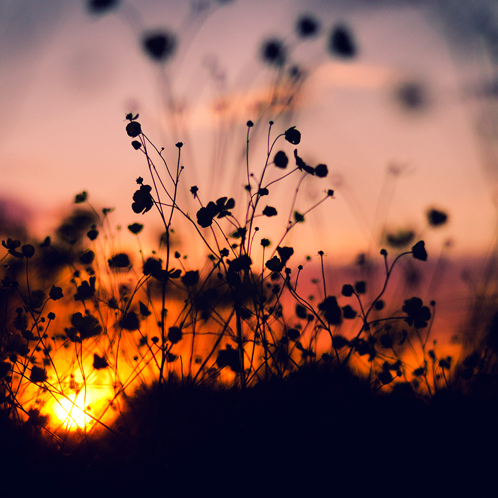 sunset song essays Sunset song essay john guthrie it develops a descriptive or analytic song in that it describes and analyzes types of subjective sunset activity or experience, in short, acts of consciousness.