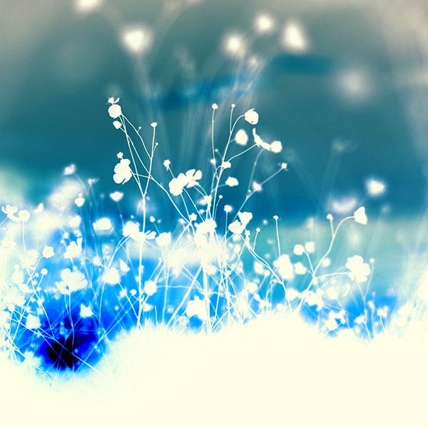 iPapers.co-Apple-iPhone-iPad-Macbook-iMac-wallpaper-mv65-night-nature-flower-sunset-shadow-white-blue-wallpaper