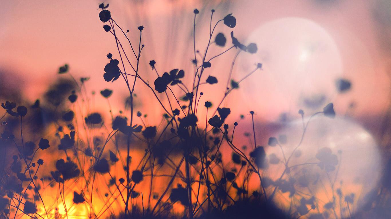 wallpaper for desktop, laptop | mv66-night-nature-flower ...