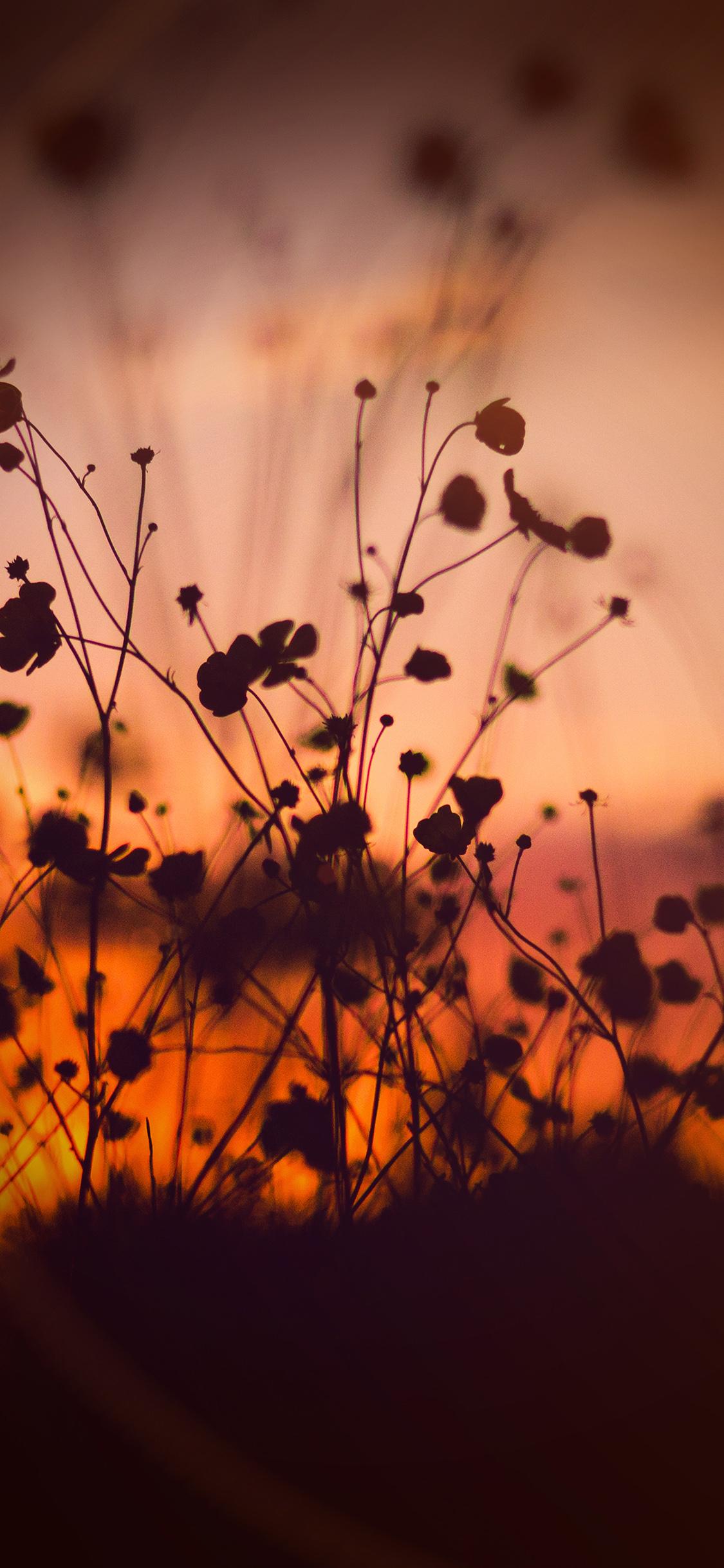 iPhonexpapers.com-Apple-iPhone-wallpaper-mv67-night-nature-flower-sunset-dark-shadow-orange-flare