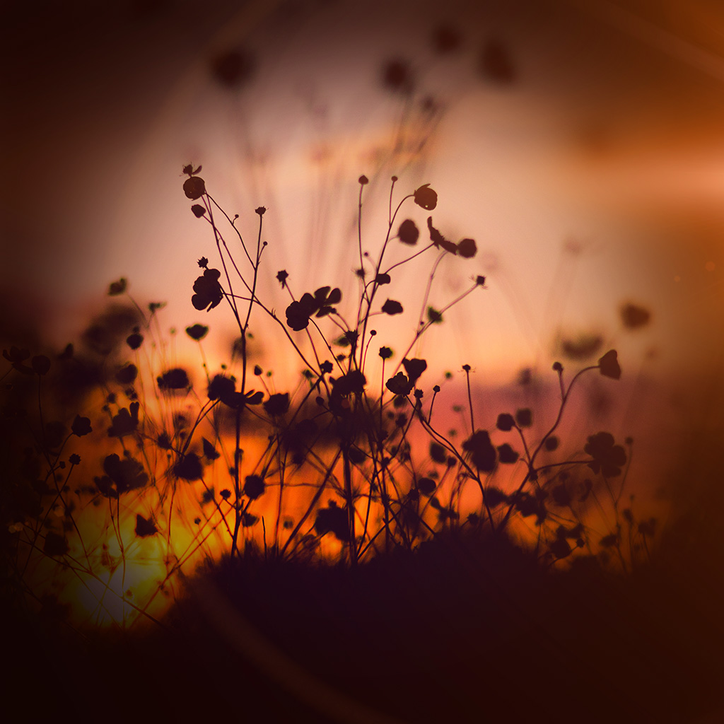 wallpaper-mv67-night-nature-flower-sunset-dark-shadow-orange-flare-wallpaper