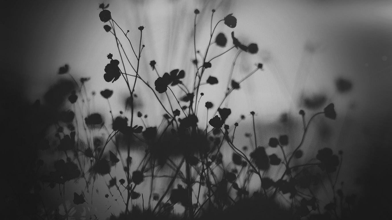 desktop-wallpaper-laptop-mac-macbook-air-mv69-night-nature-flower-sunset-black-dark-bw-wallpaper