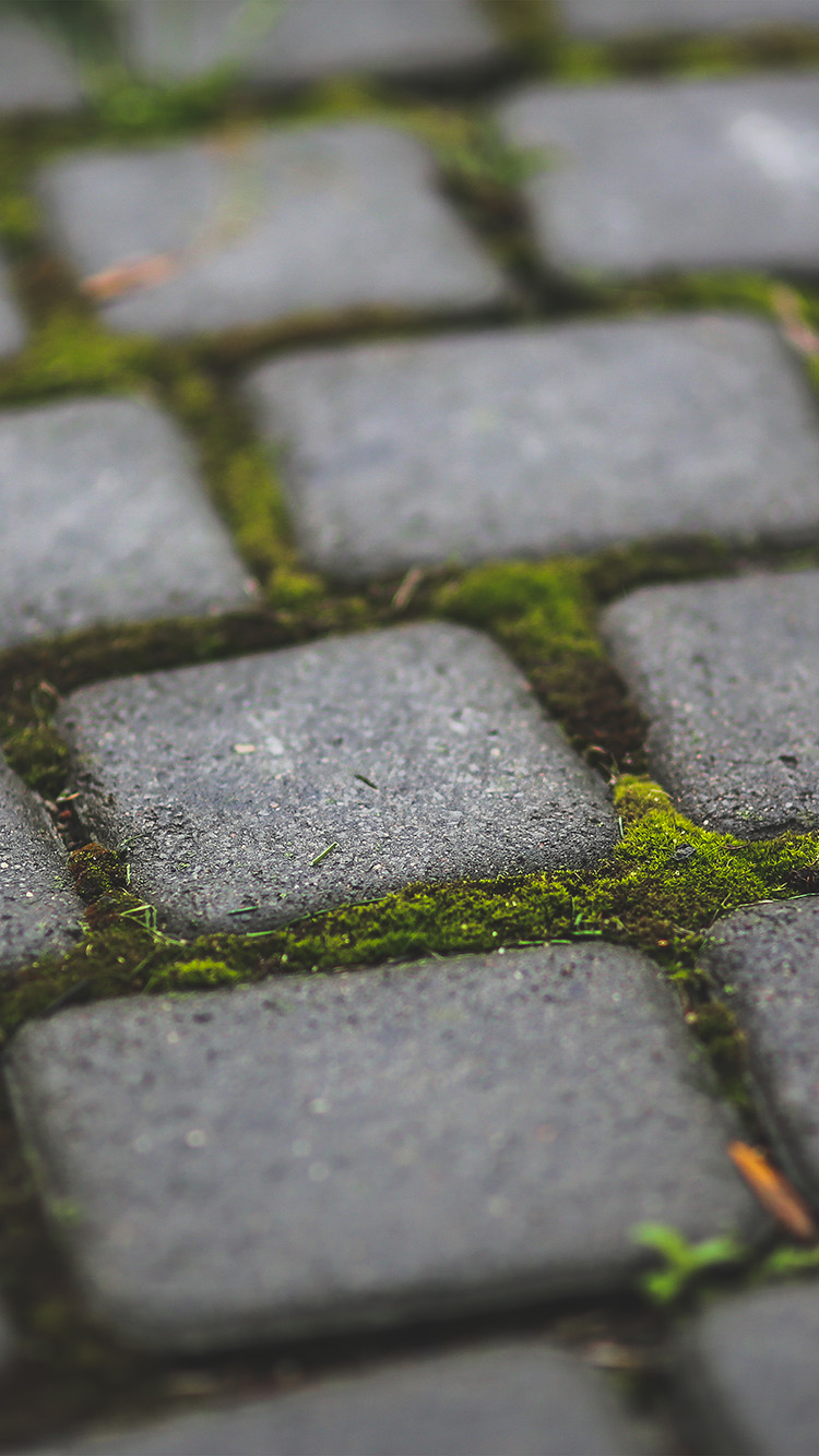 Papers.co-iPhone5-iphone6-plus-wallpaper-mv87-garden-moss-stone-nature-road-city