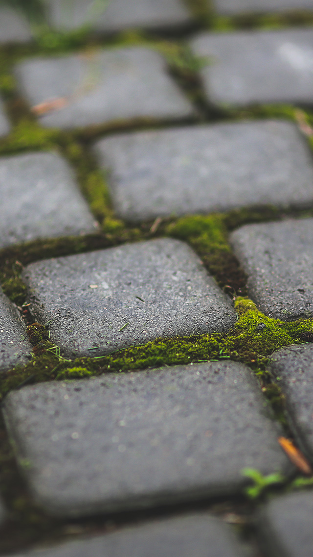 freeios8.com-iphone-4-5-6-plus-ipad-ios8-mv87-garden-moss-stone-nature-road-city