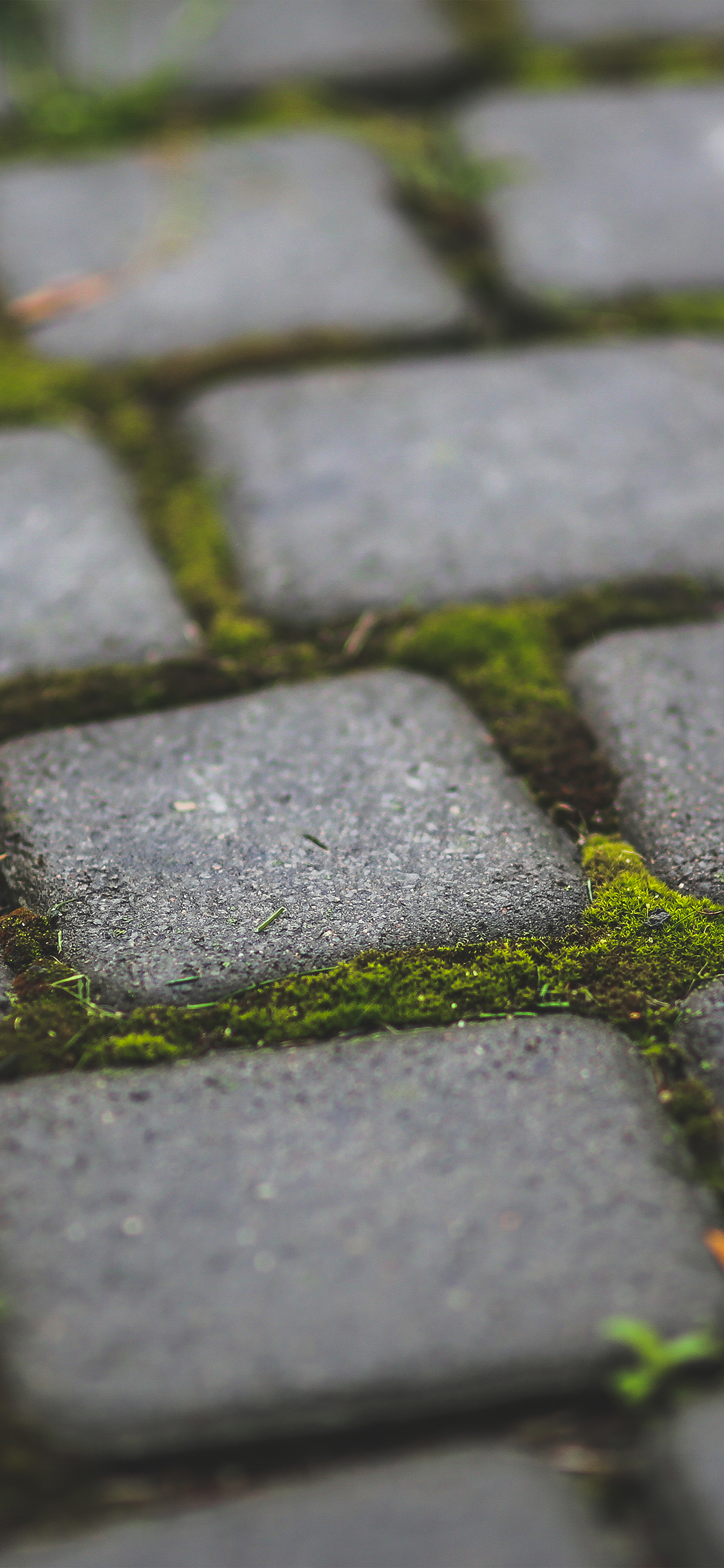 iPhoneXpapers.com-Apple-iPhone-wallpaper-mv87-garden-moss-stone-nature-road-city