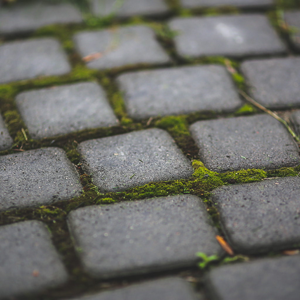 android-wallpaper-mv87-garden-moss-stone-nature-road-city-wallpaper