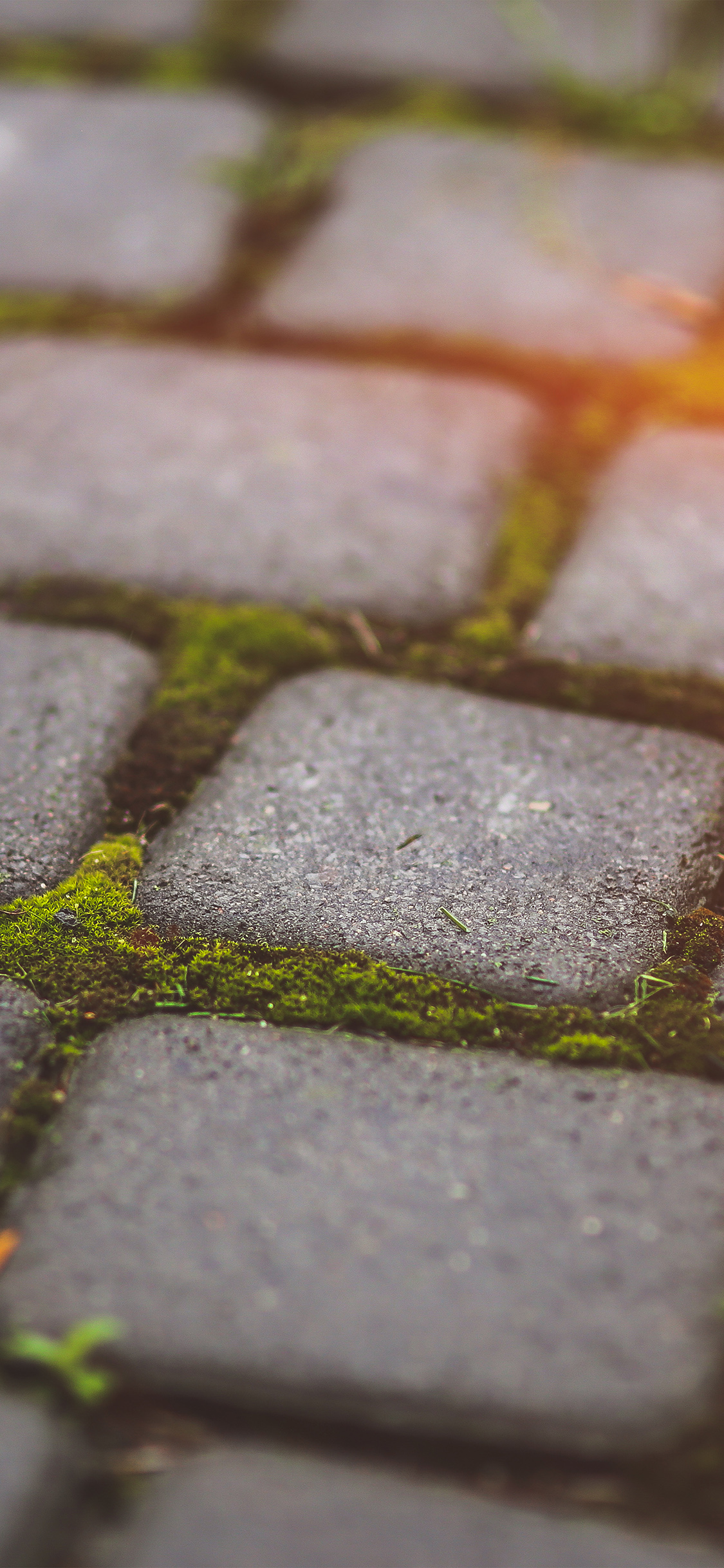 iPhoneXpapers.com-Apple-iPhone-wallpaper-mv88-garden-moss-stone-nature-road-city-flare